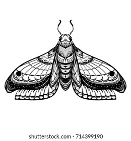 Butterfly sketch. Detailed realistic sketch of a moth