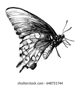 butterfly , sketch vector graphics black and white drawing