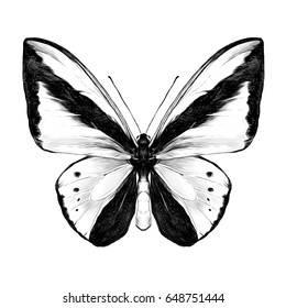 butterfly symmetric top view sketch vector graphics black and white drawing