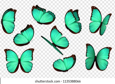 Butterfly vector. Blue isolated butterflies. Insects with bright coloring on transparent background