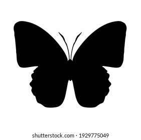 Butterfly vector icon, isolated on white