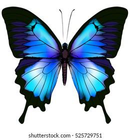 蝴蝶矢量插图。 美丽的蔚蓝孤立的蝴蝶