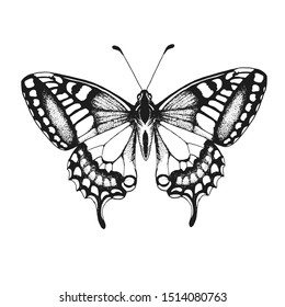 butterfly, vector illustration isolated on white background, hand drawing, ink