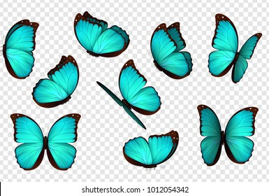 Butterfly vector illustration. Set blue isolated butterflies. Insects Lepidoptera Morpho amathonte. Transparent background