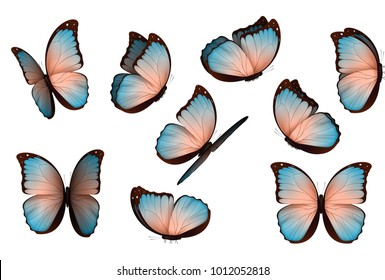 Butterfly vector illustration. Set colorful isolated butterflies. Insects Lepidoptera Morpho amathonte.