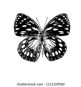 Butterfly. Vector illustration.Isolated on a white