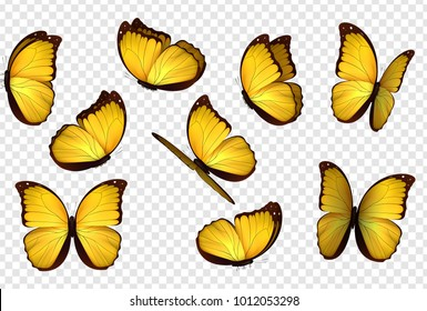 Butterfly vector. Yellow isolated butterflies.