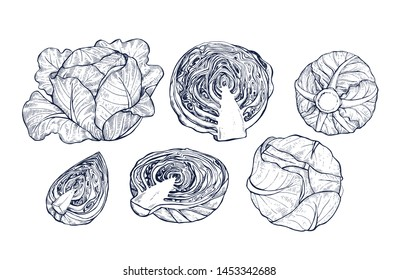 Cabbage collection botanical hand drawn Isolated vector illustration. Organic vegetarian product. Cabbage set applicable for restaurant menu or packaging, label, poster, print. Engraving style.