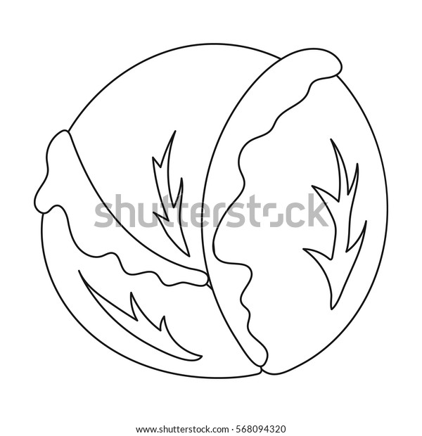 Cabbage icon outline. Singe vegetables icon from the eco food outline.