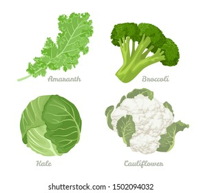 Cabbage set. Vector illustration of cabbage, kale, broccoli, Cauliflower Isolated On A White Background. Healthy organic food, fresh green vegetables in cartoon flat style.