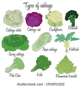 Cabbage varieties. Free style illustration of different types of cabbage.