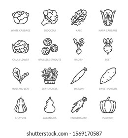 Cabbage vegetables flat line icons set. Kale, broccoli, cauliflower, brussels sprouts, radish daikon beetroot vector illustrations. Outline pictogram food store. Pixel perfect. Editable Strokes.