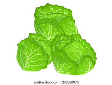 cabbages isolated