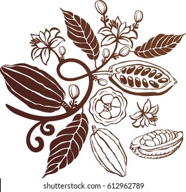 Cacao beans plant