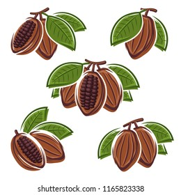 Cacao beans set. Vector