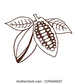 Cacao beans Vector illustration. Element of seamless pattern. Hand drawn cacao beans and cacao tree leafs