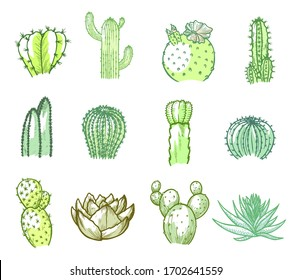 Cacti set, green floral decoration in watercolor. Succulent plant with a thick fleshy leaves. Vector line art cactus illustration isolated on white background