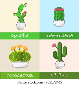 Cactus collection flat  vector set of notocactus opuntia  cereus  mammillaria in pot homeplant