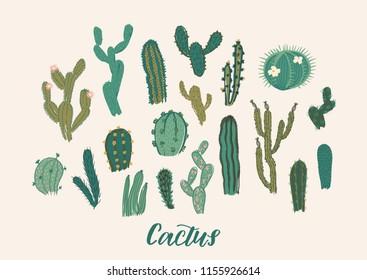 Cactus collection set. Vector illustration. Design elements