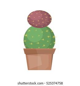 Cactus desert plant blossom flora