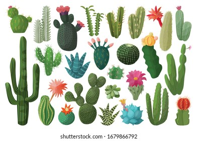 Cactus isolated cartoon set icon. Vector illustration mexican cacti on white background. Vector cartoon set icon cactus with flower.