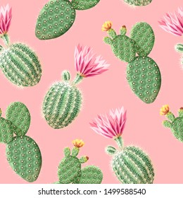 Cactus with pink flowers on the light background