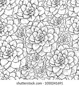 Cactus seamless vector pattern with Echeveria . Cacti fabric print design. Succulent textile surface. Hand drawn vector illustration. Elements for your design. Natural texture in engraving style
