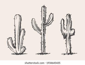 Cactus sketches vector hand drawn illustration