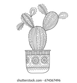 Cactus, succulent. Black and white illustration for coloring books, pages.
