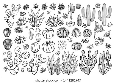Cactus succulent collection. Cacti sketchy style pastel background. Hand drawn cactuses vector illustration