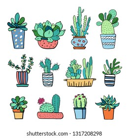 Cactus and succulent plants in flowerpots. Vector hand drawn outline color sketch illustration isolated on white background