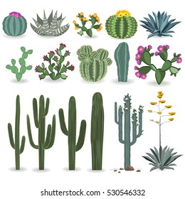 Cactus and succulent vector set. Cactuses, agave, and opuntia