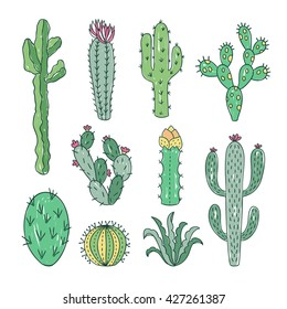 Cactus and succulents vector set. Hand drawn cacti illustration
