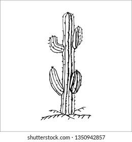 cactus vector sketch