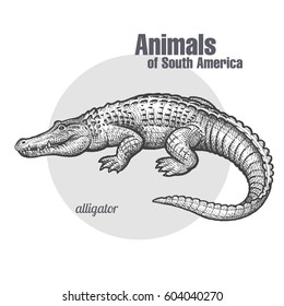 Caiman. Hand drawing of wildlife. Animals of South America series. Vintage engraving style. Vector illustration art. Black and white. Isolated object of nature naturalistic sketch.