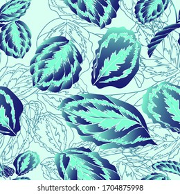 Calathea. Tropical plant. Leaves. Vegetation. Seamless vector pattern with flowers. Hand drawing.