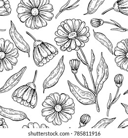 Calendula seamless pattern.  Isolated medical flower and leaves drawing. Vector herbal engraved style background. Botanical sketch for tea, organic cosmetic, medicine, aromatherapy