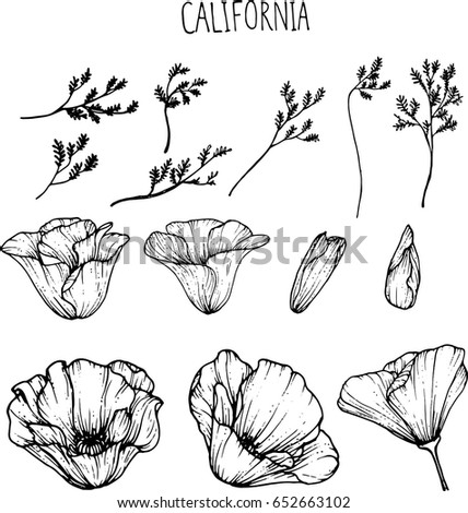 California Flower Clipart Illustration Stock Vector Royalty Free