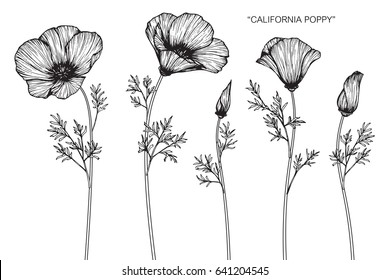 Poppy line images stock photos vectors shutterstock california poppy flowers drawn and sketch with line art on white backgrounds mightylinksfo
