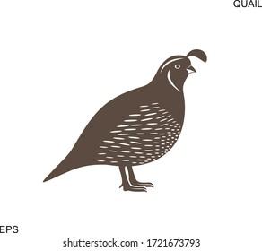 California Quail. Isolated quail on white background