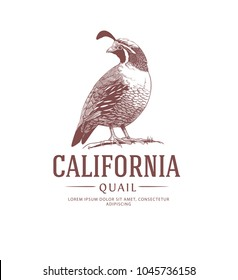 California Quail Vintage Logo. State Bird Drawing