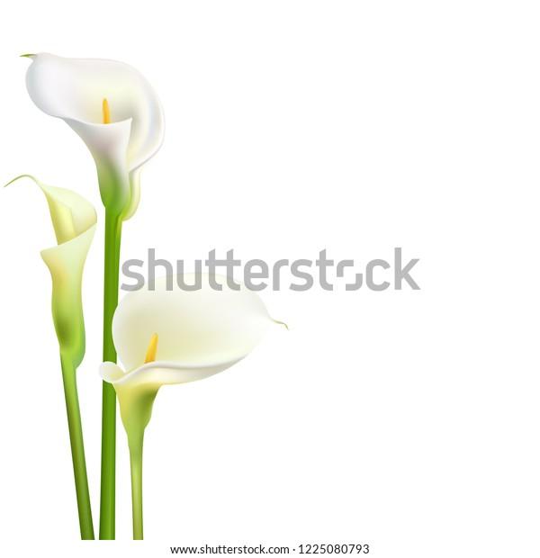 Calla Flowers. White Bouquet. Greeting Card Wedding.