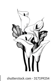Calla lilly floral, black and white illustration, vector
