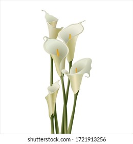 Calla Lily white vector. Linear and radial white gradient fill. White background