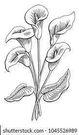 Callas flower graphic black white isolated bouquet sketch illustration vector