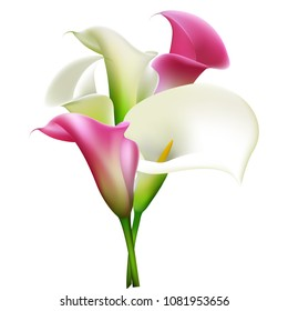 Callas. Flowers. Bouquet. Floral background. White. Pink.