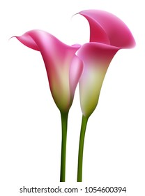 Callas. Flowers. Floral background. Pink. Bouquet.