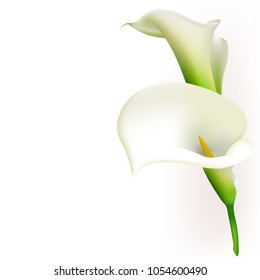 Callas. Flowers. Floral background. White.