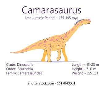 Camarasaurus. Sauropodomorpha dinosaur. Colorful vector illustration of prehistoric creature camarasaurus and description of characteristics, period of life isolated on white background. Fossil dino.