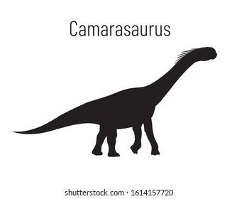 Camarasaurus. Sauropodomorpha dinosaur. Monochrome vector illustration of silhouette of prehistoric creature camarasaurus isolated on white background. Stencil. Huge fossil dinosaur.